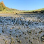 ozark-fish-snails