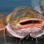 Osage Catfisheries